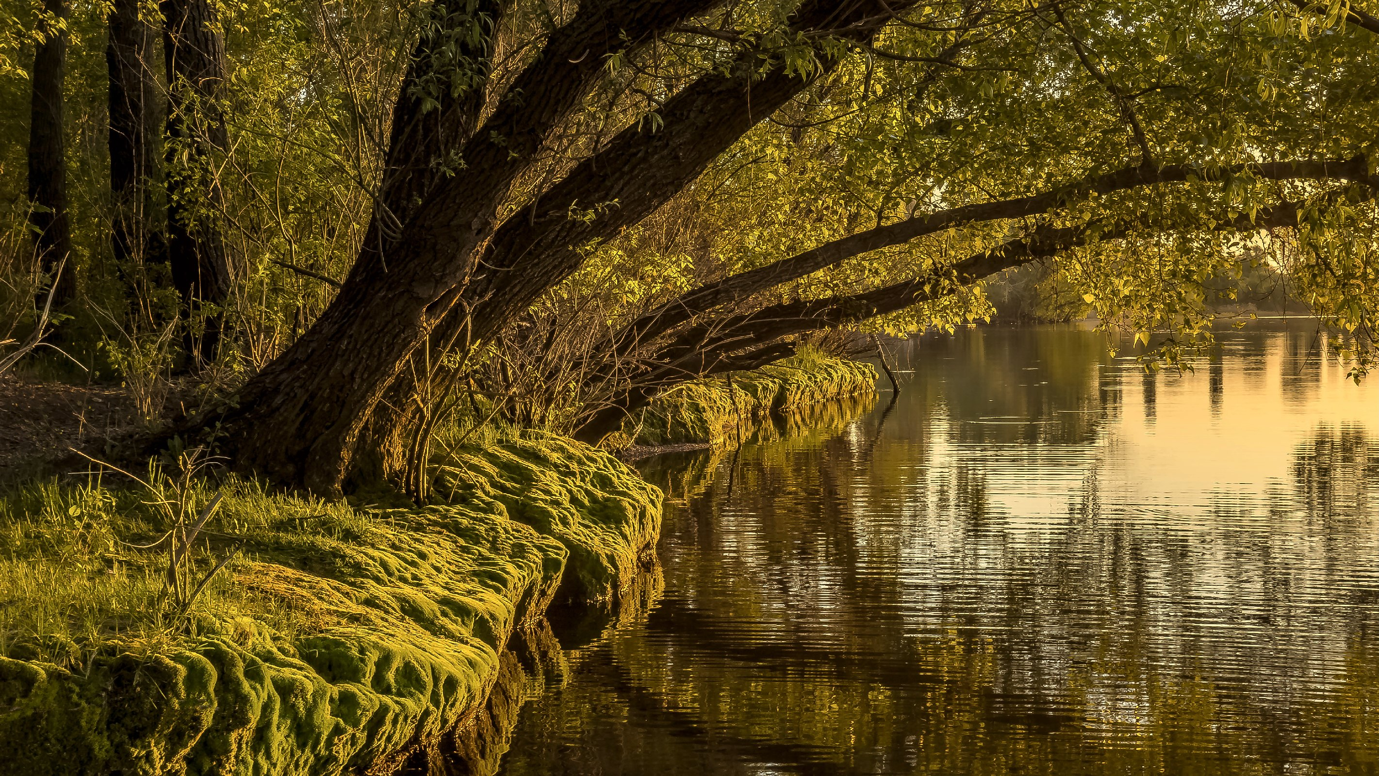 Wandbild Fluss Fototapete Poster XXL Ufer Natur Gewässer Baum Holz  WA311